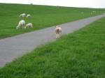 Lamm gehabt !